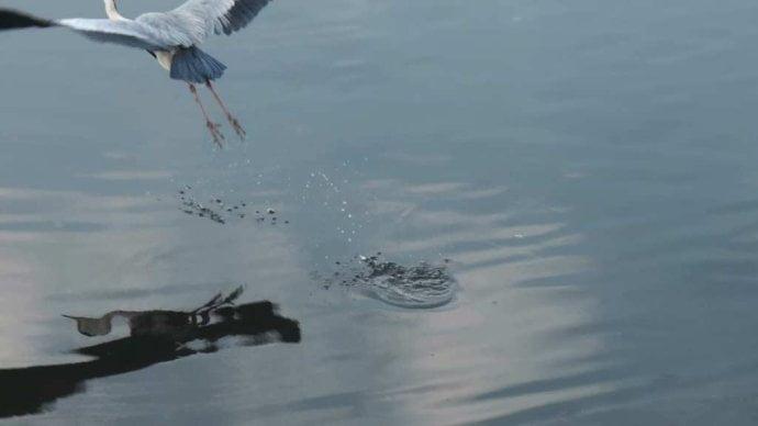 漫才 オチ 立つ鳥跡を濁さず